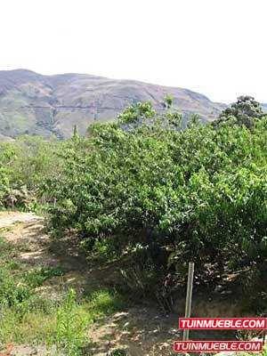 Terreno En Venta En Aragua - Tovar (la Colonia Tovar)